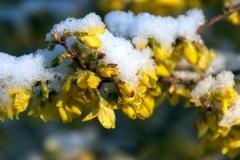 18  Og så kom der sne. Foto: Lise Peltola