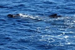 19  Pukkelhvaler-Mor-og-Barn-i-Forårshumør. Foto: Bo Jensen