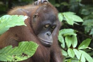 Borneo 2013