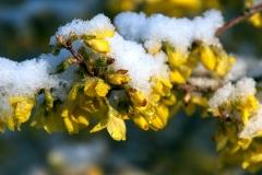 Og så kom der sne. Foto: Lise Peltola