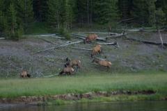 MG_1037-Elks