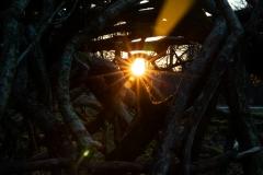 Mod solnedgang i dyrhave
